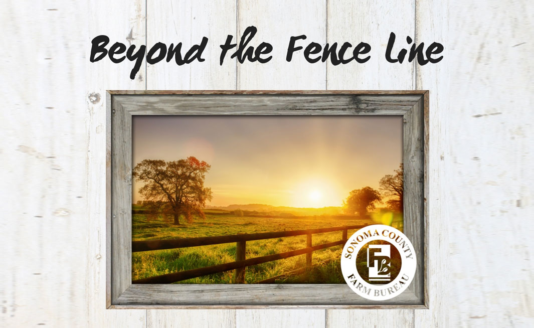 Beyond The Fence Line